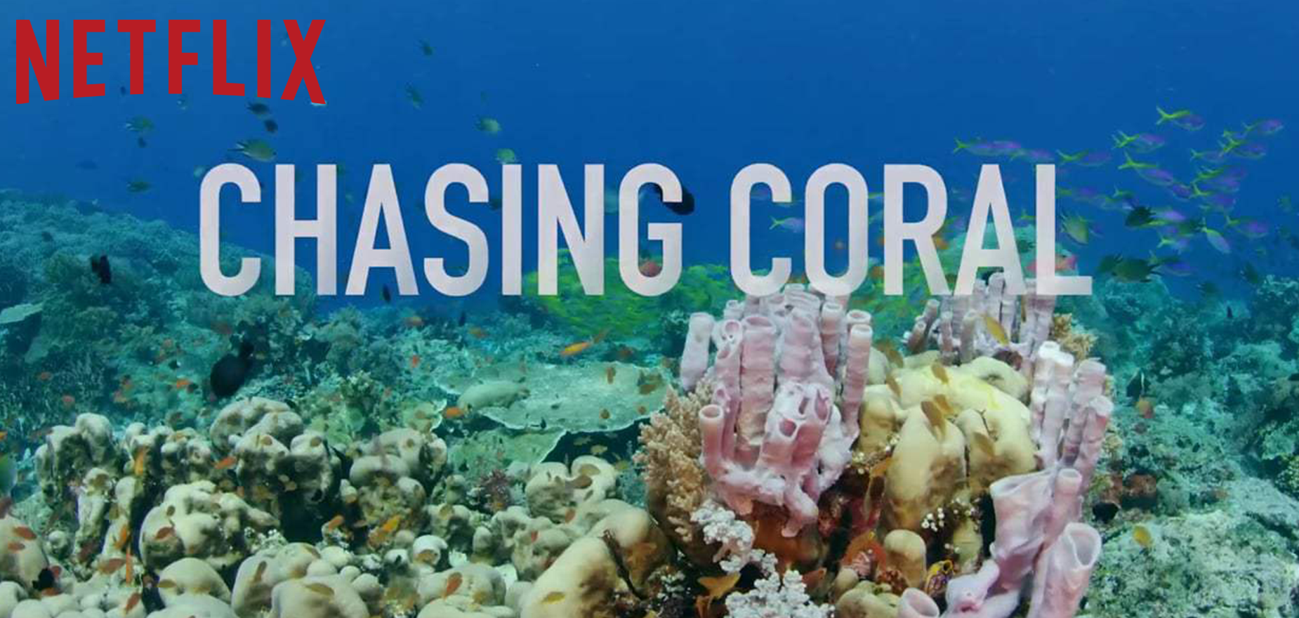 Chasing Coral - An Exposure Labs Production in partnership with The Ocean Agency + View Into the Blue in association with Argent Pictures